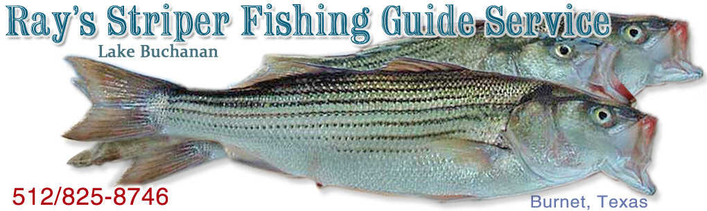 Ray's Striper Fishing Guide Service 512/825-8746 Lake Buchanan, TX